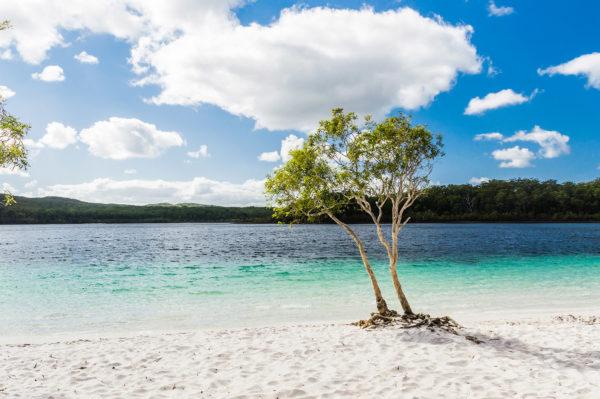 """Fraser Island – Lake McKenzie, von Benedikt Juerges / <a href=""""https://www.shutterstock.com/de/image-photo/beautiful-pure-lake-mckenzie-fraser-island-346695623?src=BDfq8L0-SEOab6MHZWlrpQ-1-2"""">Shutterstock</a>"""
