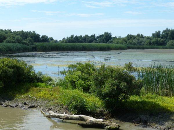 Donau Delta / Delta Dunării