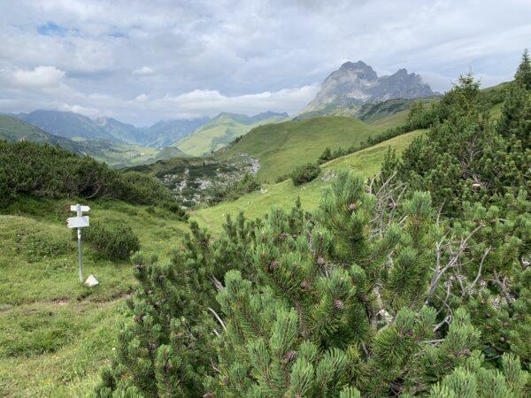 Am Haldenwanger Eck – im Hintergrund der Gipfel des Widderstein