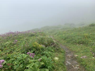 Nebel im Bereich der Steffisalp-Bergstation