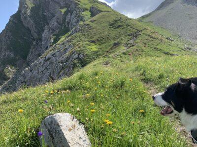 Blick hinauf zum Gipfel des Warther Horn