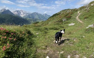 Wanderungen mit dem Hund – unterwegs im Lechtal/Vorarlberg